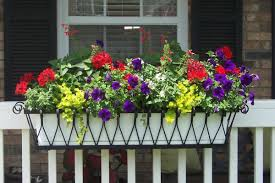 easy balcony garden ideas that need no warden