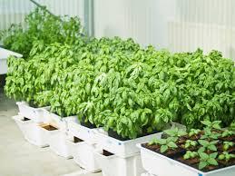 hydroponic veggie garden make