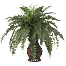 indoor plants you u0027ll love wayfair