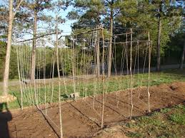 pole bean trellis diy google search gardening pinterest