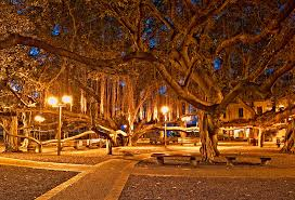 banyan tree park before lahaina its almost flickr