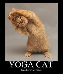 Success Cat Meme - yoga cat jpg
