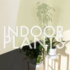 indoor house plants u2013 tiffanys tidings