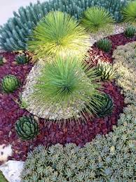 rustic landscape yard with desert landscaping succulent garden