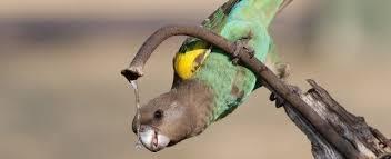 vital l full spectrum light for birds choosing a meyers parrot petplace