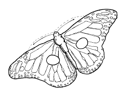 butterfly wing outline free download clip art free clip art