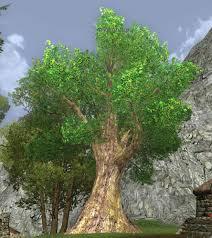 item shire oak tree lotro wiki