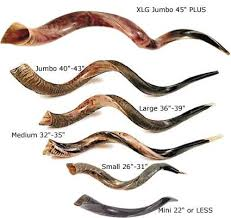 shofar horns hebrew shofar ram horns the shofar is a ram or kudu horn with a