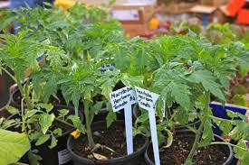 manitoba native plants annual plant sale ashland garden club