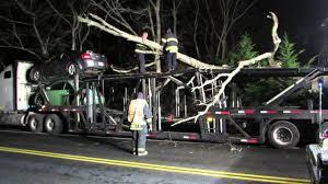 car carrier vs tree