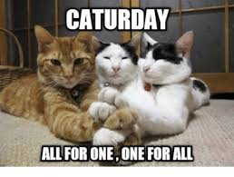 Caturday Meme - caturday all for oneone for all caturday meme on me me