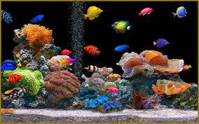 many types of aquarium fish 4240083 800x600 all for desktop