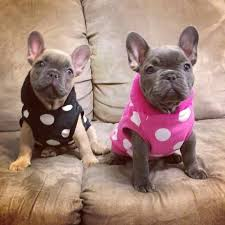 Fowers 27 Best Fowers Frenchies Images On Pinterest Facebook Utah And