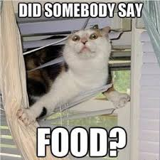 I Like Food Meme - the fact that somebody saw this and thought picture time has
