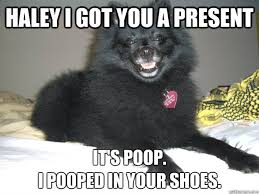 Haley Meme - haley i got you a present it s poop i pooped in your shoes