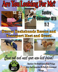 Boulder Craigslist Org Denver by Denver Dachshunds Rescue And Transport Nationwide Dachshund Rescue