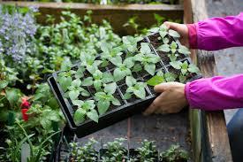 how to harden off tender plants u2013 which gardening helpdesk