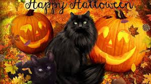 fall pumpkin wallpaper hd happy animals with pumpkins wallpaper