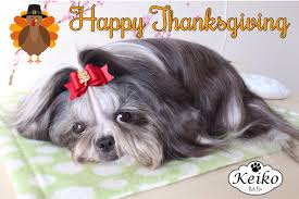 Have A Great Thanksgiving Day Shihtzu Keiko Shih Tzu Page 2