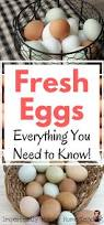 fresh eggs everything you need to know how to clean store and