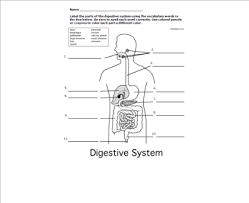 smart exchange usa digestive system interactive diagram