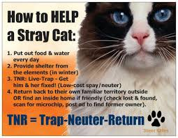 Cat Trap Meme - vernon and district animal care society vdacs
