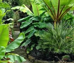 Gardening Zones Uk - 370 best tropical iowa garden zone 5 images on pinterest tropical