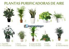 plante de bureau feng shui les 25 meilleures idées de la catégorie plantas para oficina sur