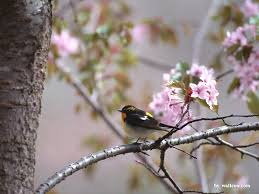 lovely birds wallpaper lovely bird in spring vol 1 1024x768 no