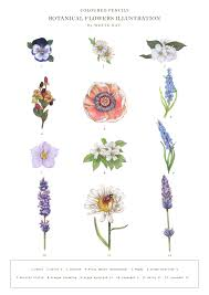jasmine flower drawings related keywords u0026 suggestions jasmine