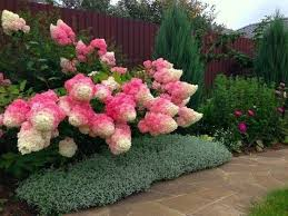 Summer Flowers For Garden - 997 best shade garden plants images on pinterest plants shade