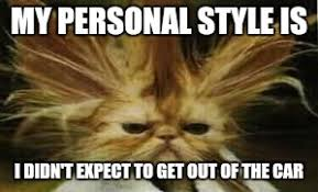 Bad Hair Day Meme - bad hair day cat imgflip