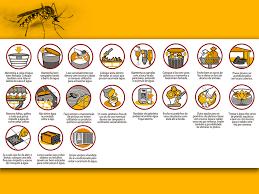 Challenge O Que ã Prevenção E Combate Ao Aedes Aegypti Portal Seu Lugar