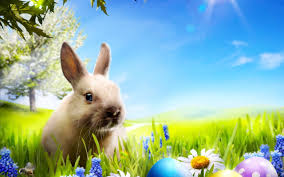beautiful easter bunny and coloured eggs