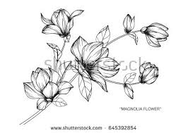 Flower Drawings Black And White - flower sketch stock images royalty free images u0026 vectors