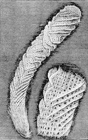 file psm v03 d551 venus flower basket jpg wikimedia commons