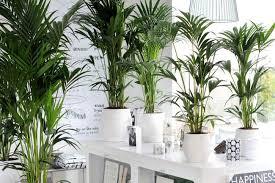 indoor planting grow tropical indoor plants the garden glove