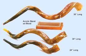 shofar store shofar shofars yemenite shofars polished biblical gallery