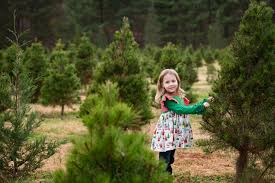 christmas tree farm family sessions charlotte lifestyle