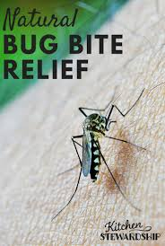 Tiny Red Bugs On Patio by Natural Home Remedies For Itchy Bug Bites