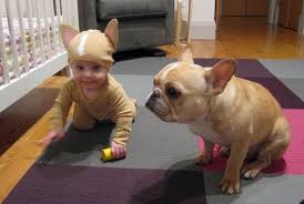 Infant Dog Halloween Costume Cute Baby Dog Costumes Aww