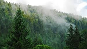 foggy forest backgrounds free download u2013 wallpapercraft