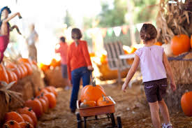 Local Pumpkin Farms In Nj by 7 Pumpkin Patches To Visit This Fall