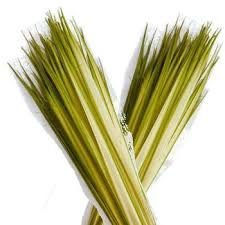 palm for palm sunday help us prep the palms for palm sunday st cyril of alexandria