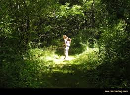Rhode Island forest images Old growth forest in rhode island eco mothering jpg