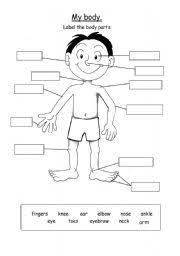 english teaching worksheets body parts parts u0027s body pinterest
