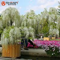 cheap 10 ornamental plants free shipping 10 ornamental plants