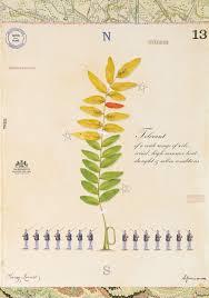 native plants of pennsylvania pa plants u2014 mf cardamone