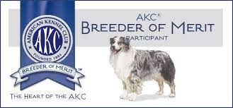 australian shepherd kennel club casa blanca australian shepherds