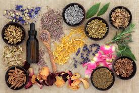 native american medicinal plants chinese herbs watershed wellness astoria